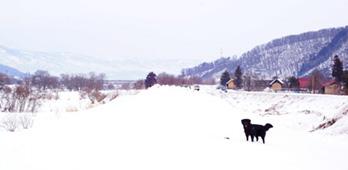 クマ、雪積に放つ